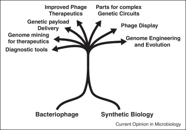 Bacteriophage - Synthetic Biology